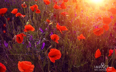 How to Mark Remembrance Day in Your Office