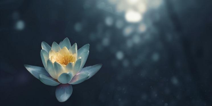 Wellbeing Wednesday: free meditation class